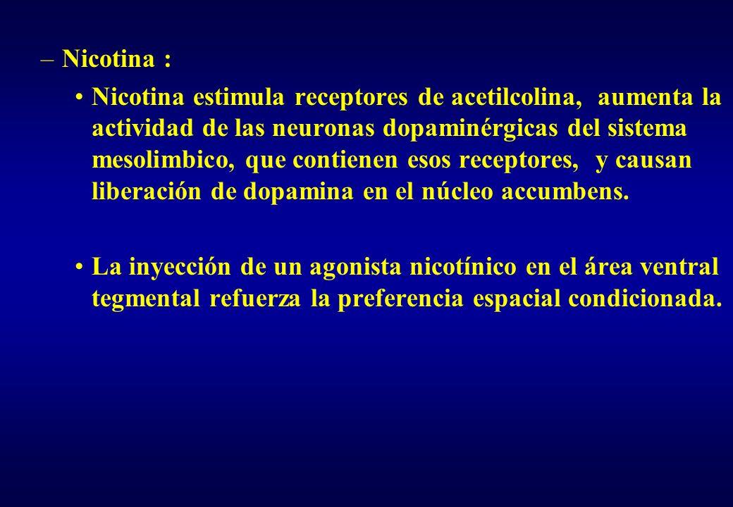 –Nicotina : Nicotina estimula receptores de acetilcolina, aumenta la actividad de las neuronas dopaminérgicas del sistema mesolimbico, que contienen e