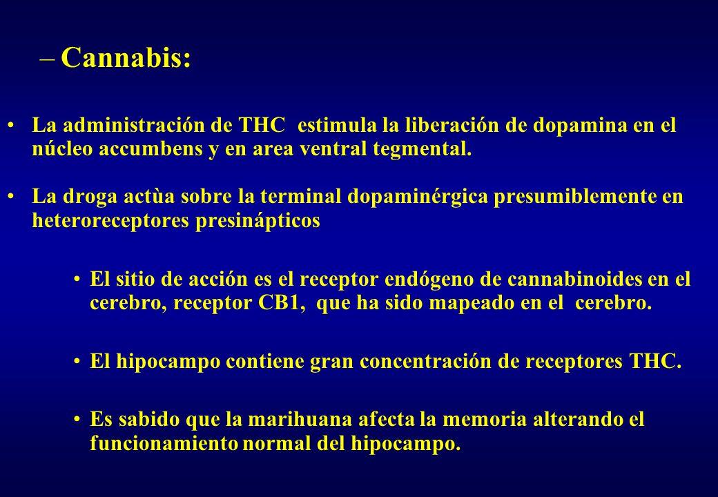 –Cannabis: La administración de THC estimula la liberación de dopamina en el núcleo accumbens y en area ventral tegmental. La droga actùa sobre la ter