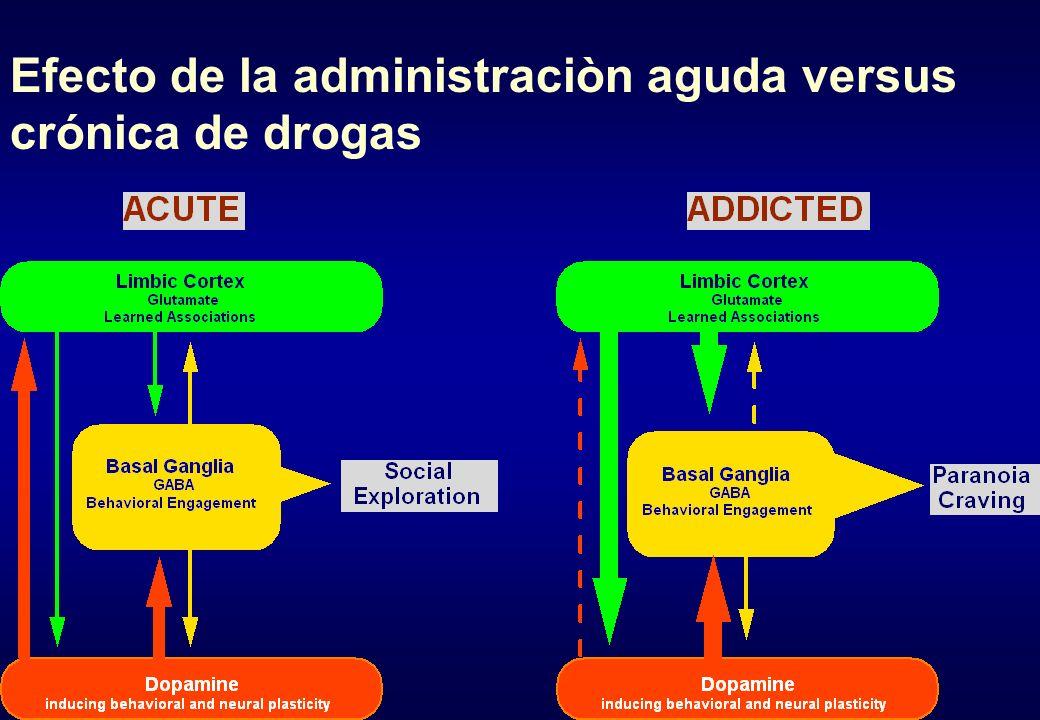 Efecto de la administraciòn aguda versus crónica de drogas