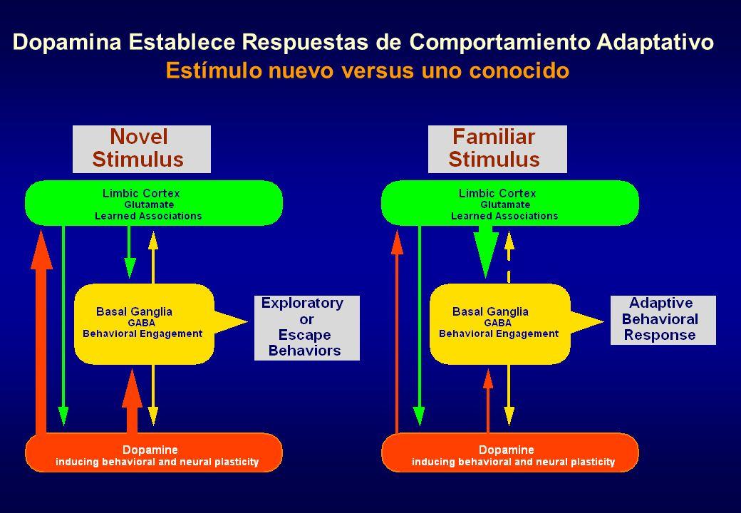 Dopamina Establece Respuestas de Comportamiento Adaptativo Estímulo nuevo versus uno conocido
