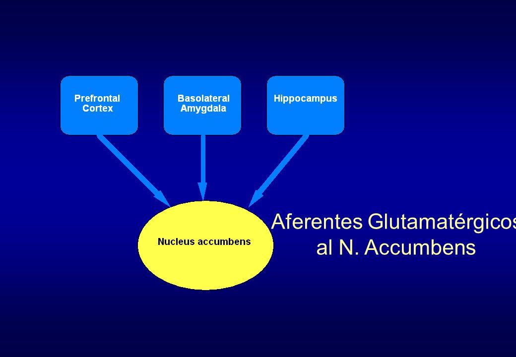 Aferentes Glutamatérgicos al N. Accumbens