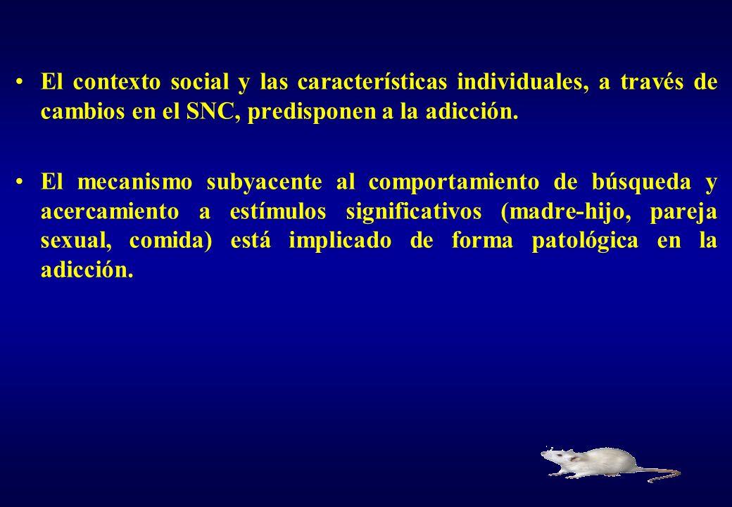 El contexto social y las características individuales, a través de cambios en el SNC, predisponen a la adicción. El mecanismo subyacente al comportami