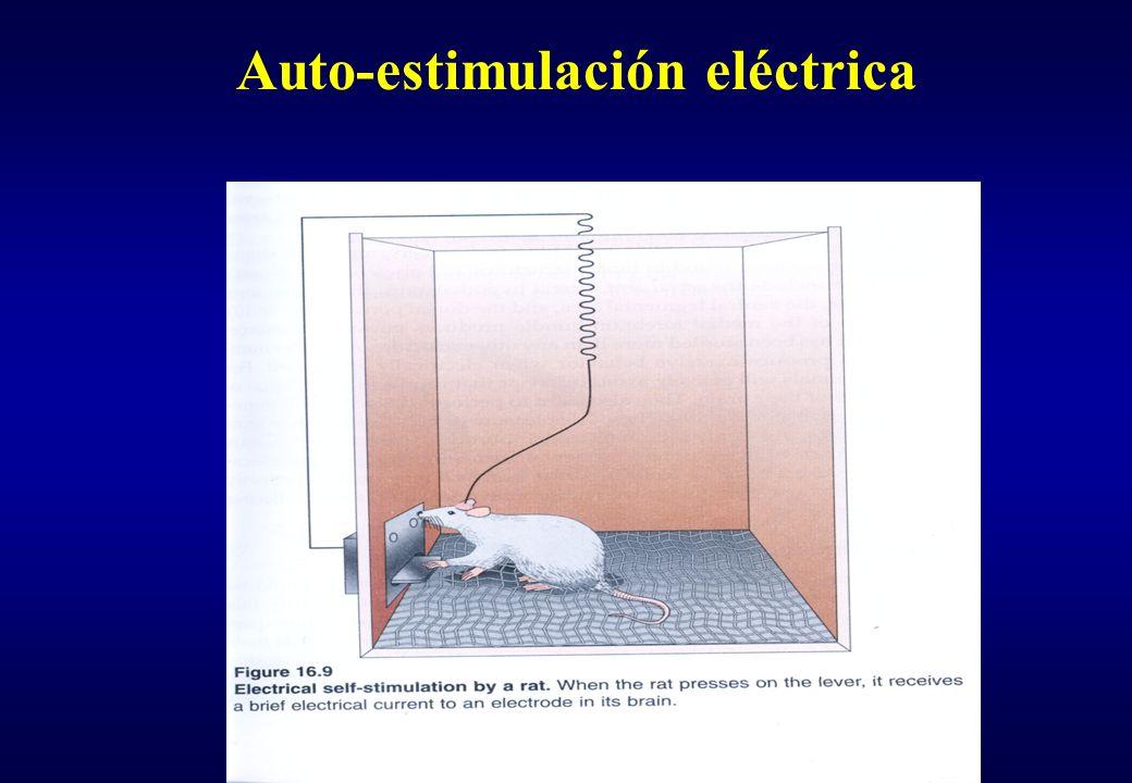 Circuito de reforzamiento (auto-estimulación )