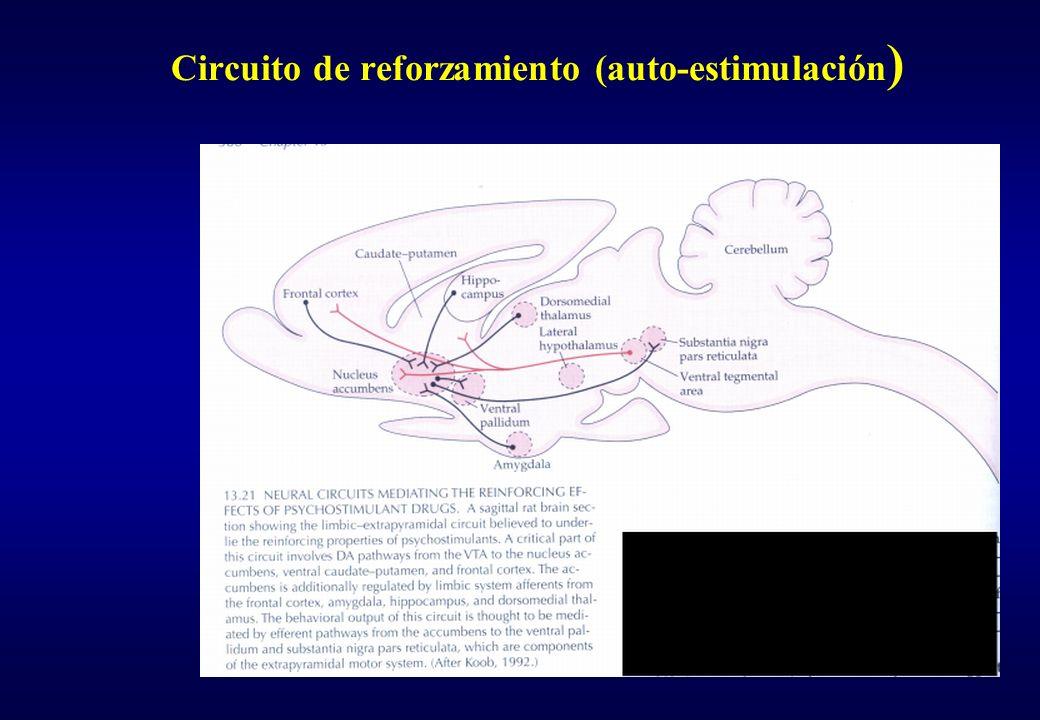 Sistema dopaminérgico Nigro-estriatal: S.N a estriado dorsal (caudado-putamen) Meso-límbico: VTA a estriado ventral y al sist.