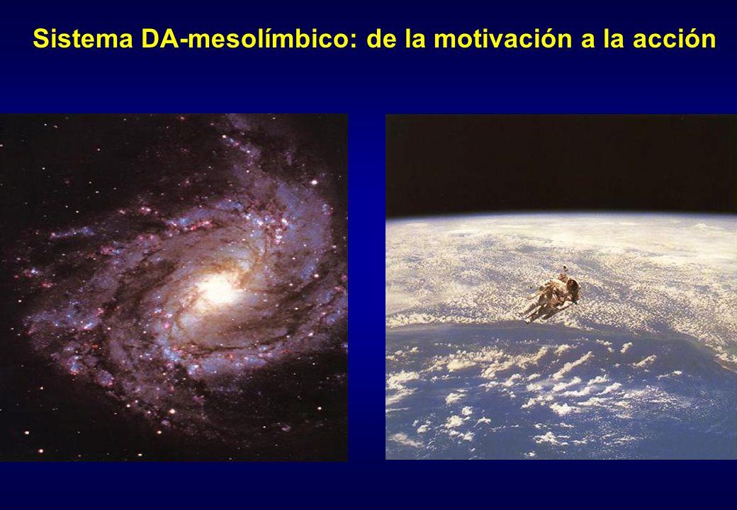 Qué provoca la liberación de DA en el sistema mesolímbico.