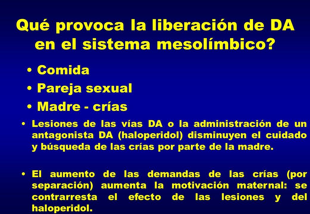 ¿ Qué provoca la liberación de DA en el sistema mesolímbico.