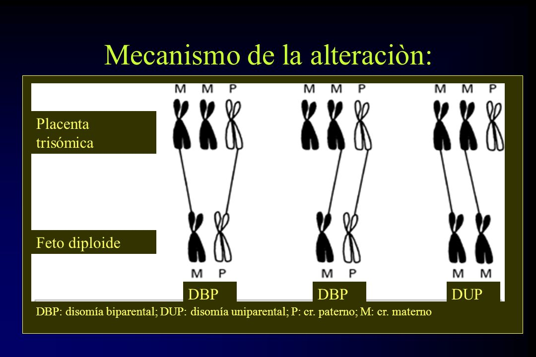 Mecanismo de la alteraciòn: Placenta trisómica Feto diploide DBP DUP DBP: disomía biparental; DUP: disomía uniparental; P: cr. paterno; M: cr. materno