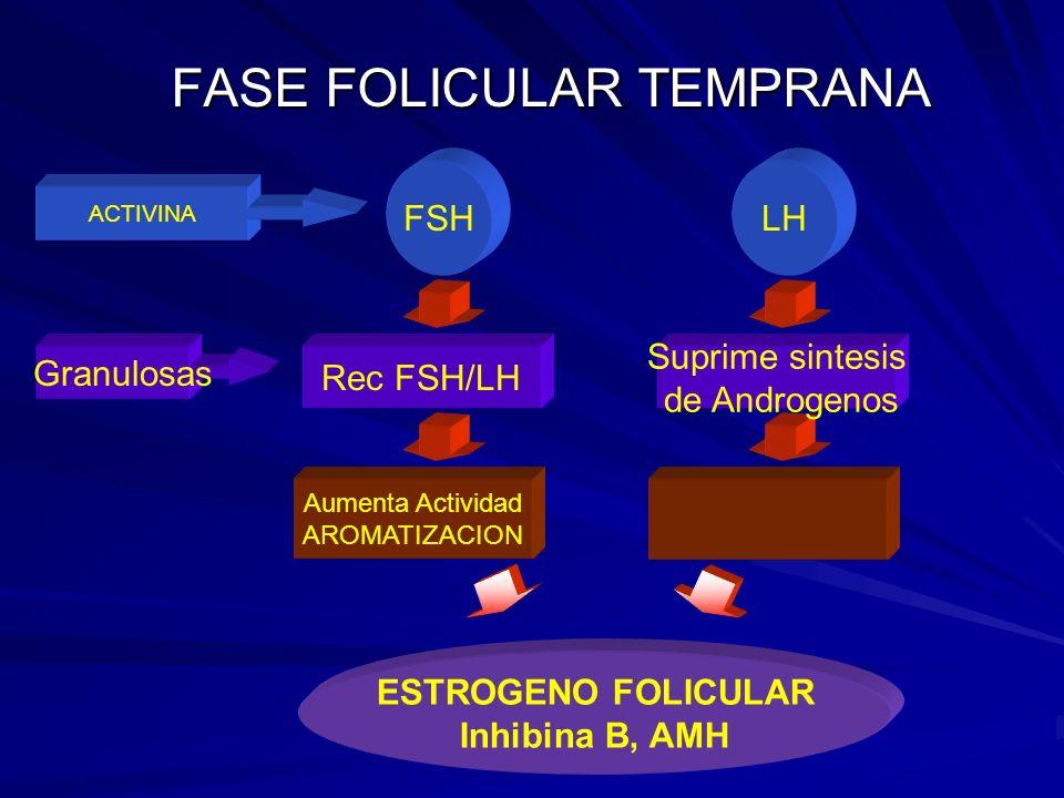 FASE FOLICULAR TEMPRANA Aumenta Actividad AROMATIZACION ESTROGENO FOLICULAR Inhibina B, AMH Suprime sintesis de Androgenos Rec FSH/LH Granulosas LHFSH ACTIVINA