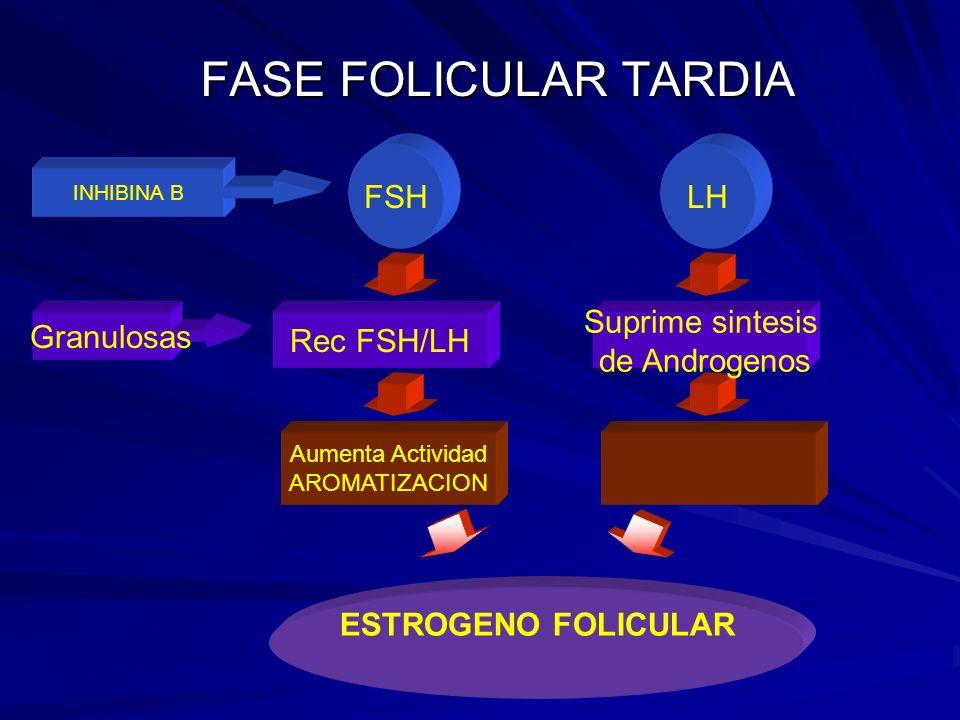 FASE FOLICULAR TARDIA Aumenta Actividad AROMATIZACION ESTROGENO FOLICULAR Suprime sintesis de Androgenos Rec FSH/LH Granulosas LHFSH INHIBINA B