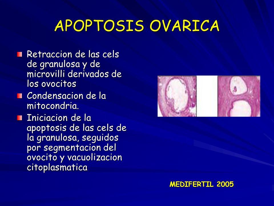 APOPTOSIS OVARICA Retraccion de las cels de granulosa y de microvilli derivados de los ovocitos Condensacion de la mitocondria. Iniciacion de la apopt
