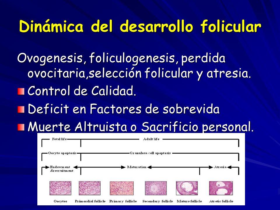 Dinámica del desarrollo folicular Ovogenesis, foliculogenesis, perdida ovocitaria,selección folicular y atresia. Control de Calidad. Deficit en Factor