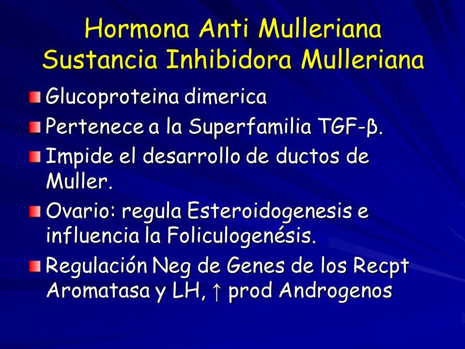 Hormona Anti Mulleriana Sustancia Inhibidora Mulleriana Glucoproteina dimerica Pertenece a la Superfamilia TGF-β.