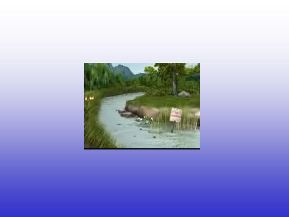 EFECTOS DE LA CONTAMINACIÓN DEL AGUA RÍOS: Debido a su dinámica poseen capacidad de autodepuración, no obstante pueden aparecer problemas de restricción de agua, alteraciones de la biocenosis, aparencia y olor desagradables.