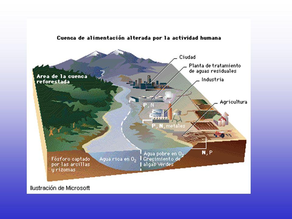 Contaminantes físicos del agua