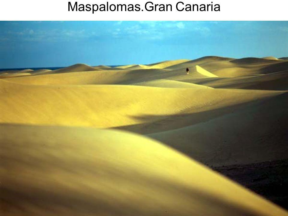 15/02/2014Pilar Morollón IES San Isidro66 Maspalomas.Gran Canaria