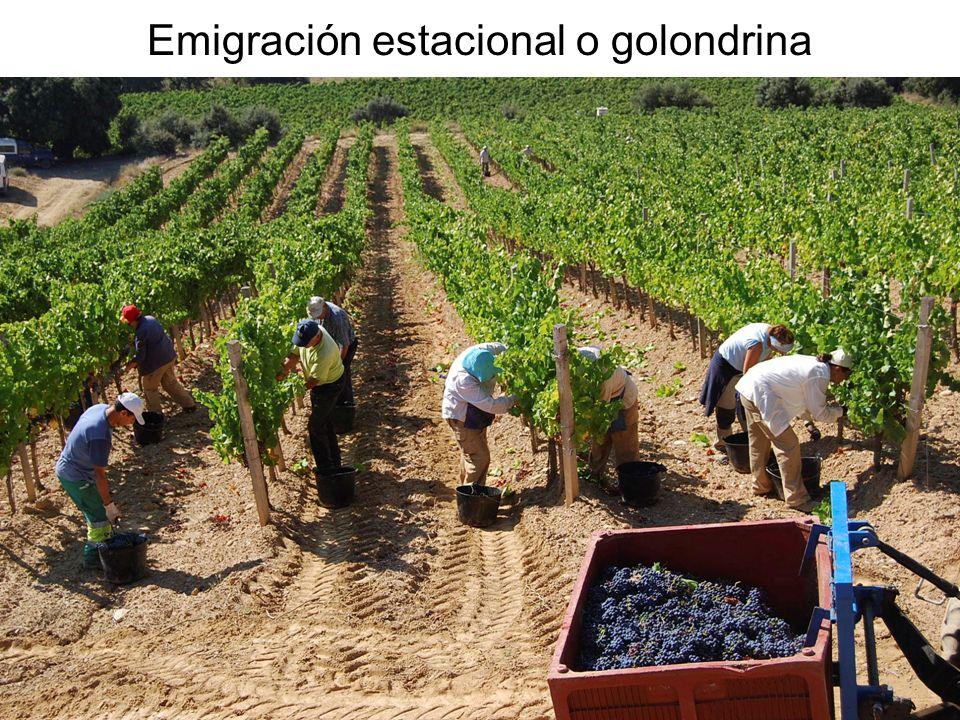 15/02/2014Pilar Morollón IES San Isidro41 Emigración estacional o golondrina