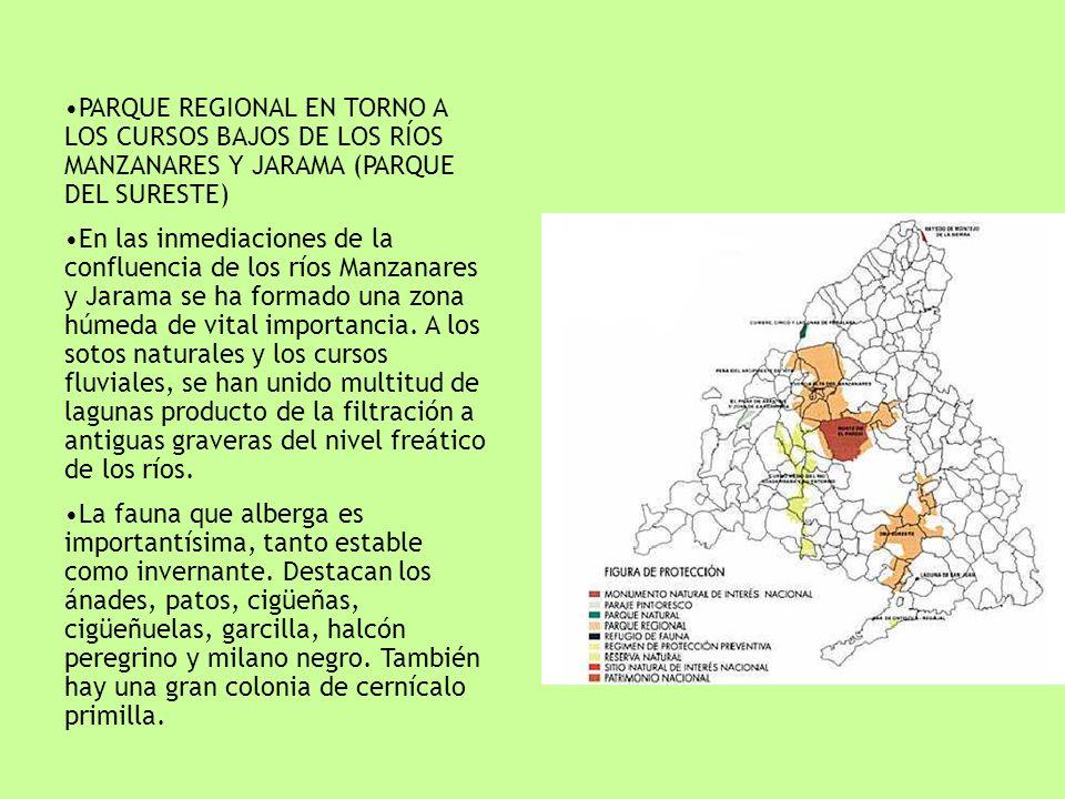 PARQUE REGIONAL EN TORNO A LOS CURSOS BAJOS DE LOS RÍOS MANZANARES Y JARAMA (PARQUE DEL SURESTE) En las inmediaciones de la confluencia de los ríos Ma