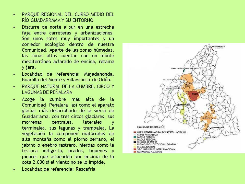 PARQUE REGIONAL DEL CURSO MEDIO DEL RÍO GUADARRAMA Y SU ENTORNO Discurre de norte a sur en una estrecha faja entre carreteras y urbanizaciones. Son un