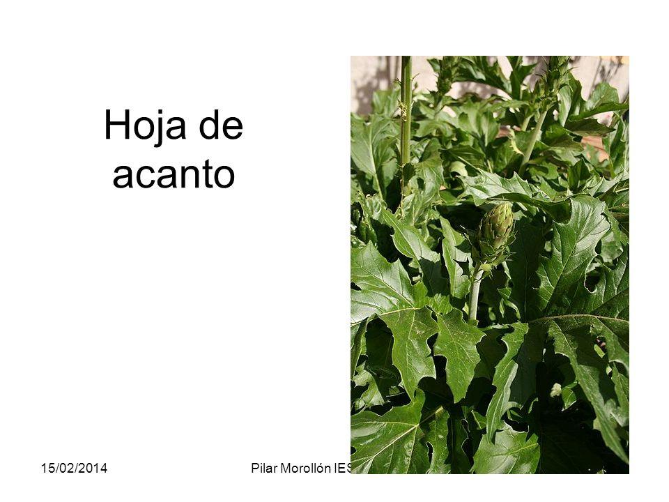 15/02/2014Pilar Morollón IES San Isidro32 Hoja de acanto