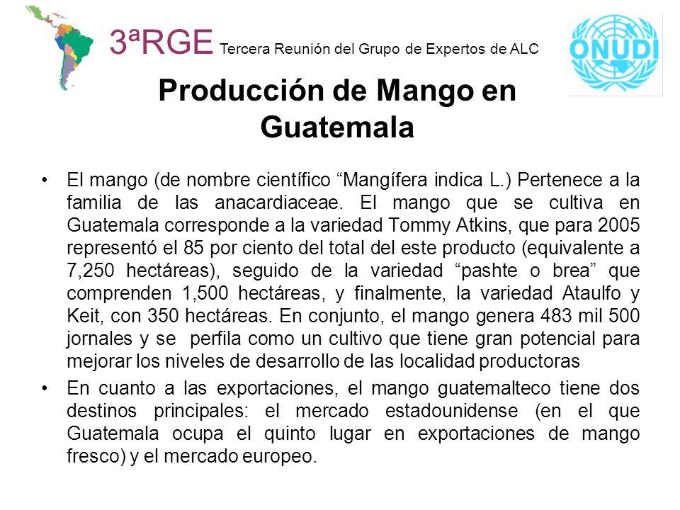 3ªRGE Tercera Reunión del Grupo de Expertos de ALC Producción de Mango en Guatemala El mango (de nombre científico Mangífera indica L.) Pertenece a la