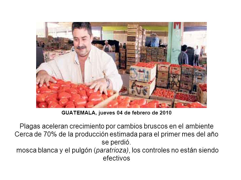 GUATEMALA, jueves 04 de febrero de 2010 Plagas aceleran crecimiento por cambios bruscos en el ambiente Cerca de 70% de la producción estimada para el