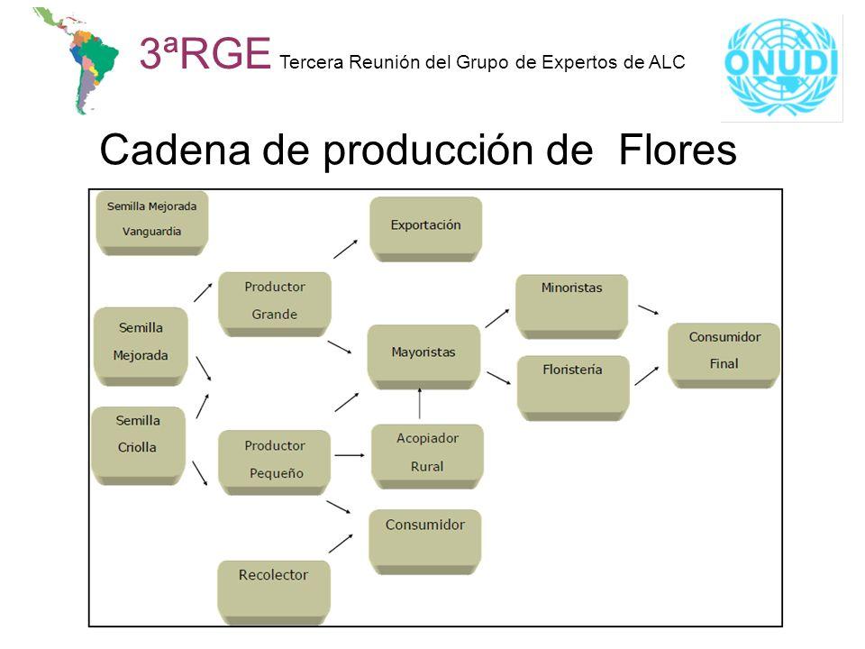 Cadena de producción de Flores 3ªRGE Tercera Reunión del Grupo de Expertos de ALC
