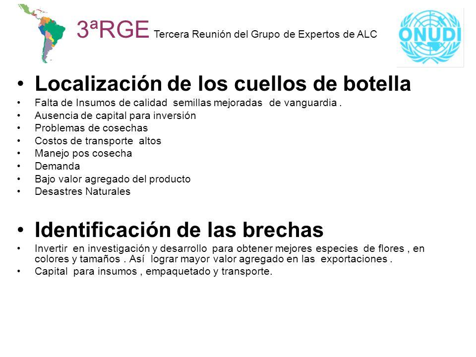 Localización de los cuellos de botella Falta de Insumos de calidad semillas mejoradas de vanguardia. Ausencia de capital para inversión Problemas de c