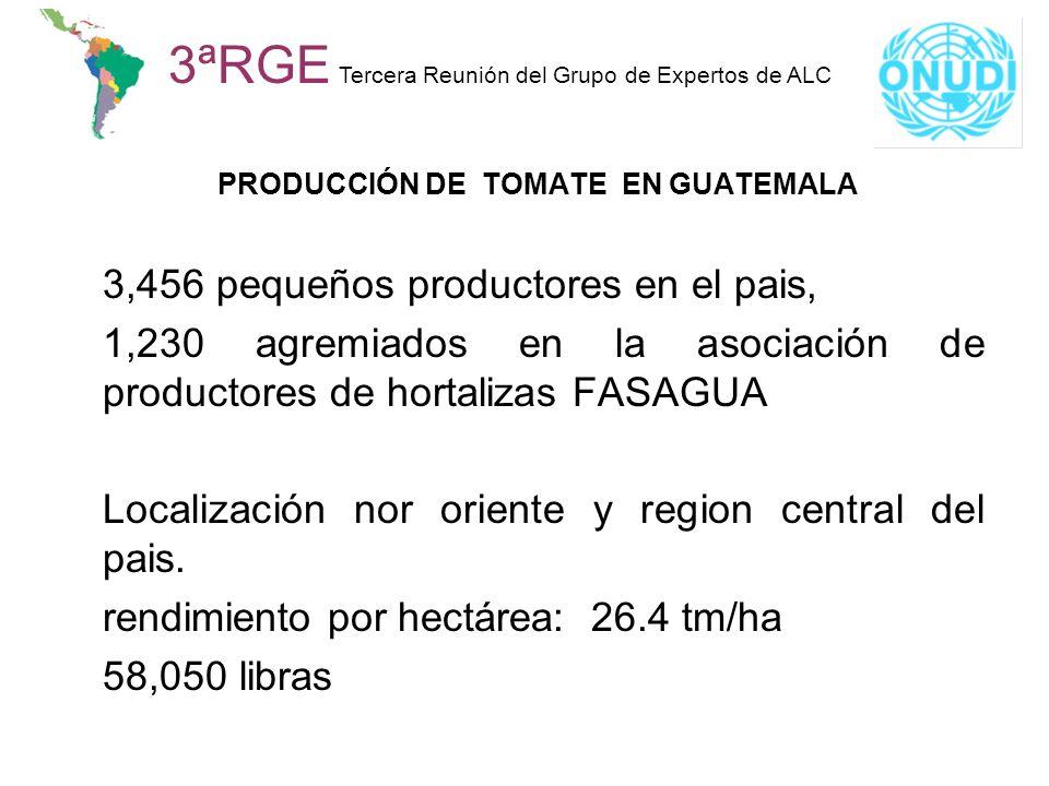 PRODUCCIÓN DE TOMATE EN GUATEMALA 3,456 pequeños productores en el pais, 1,230 agremiados en la asociación de productores de hortalizas FASAGUA Locali