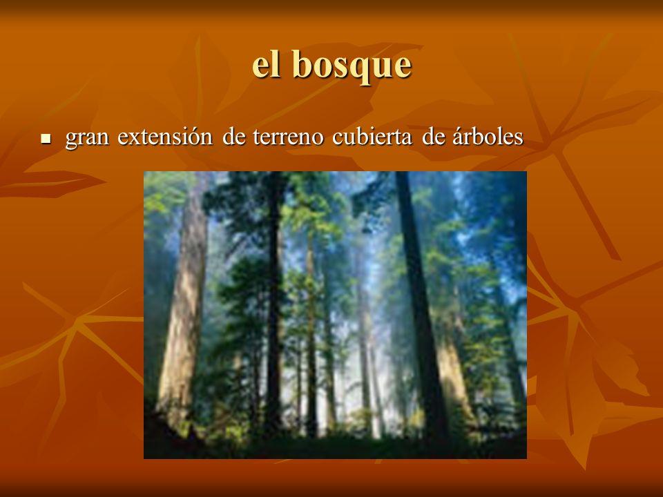 el bosque gran extensión de terreno cubierta de árboles gran extensión de terreno cubierta de árboles