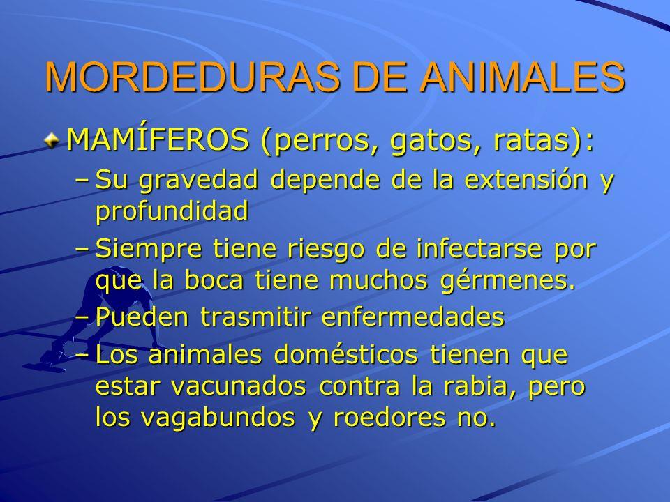MORDEDURAS DE ANIMALES MAMÍFEROS (perros, gatos, ratas): –Su gravedad depende de la extensión y profundidad –Siempre tiene riesgo de infectarse por qu