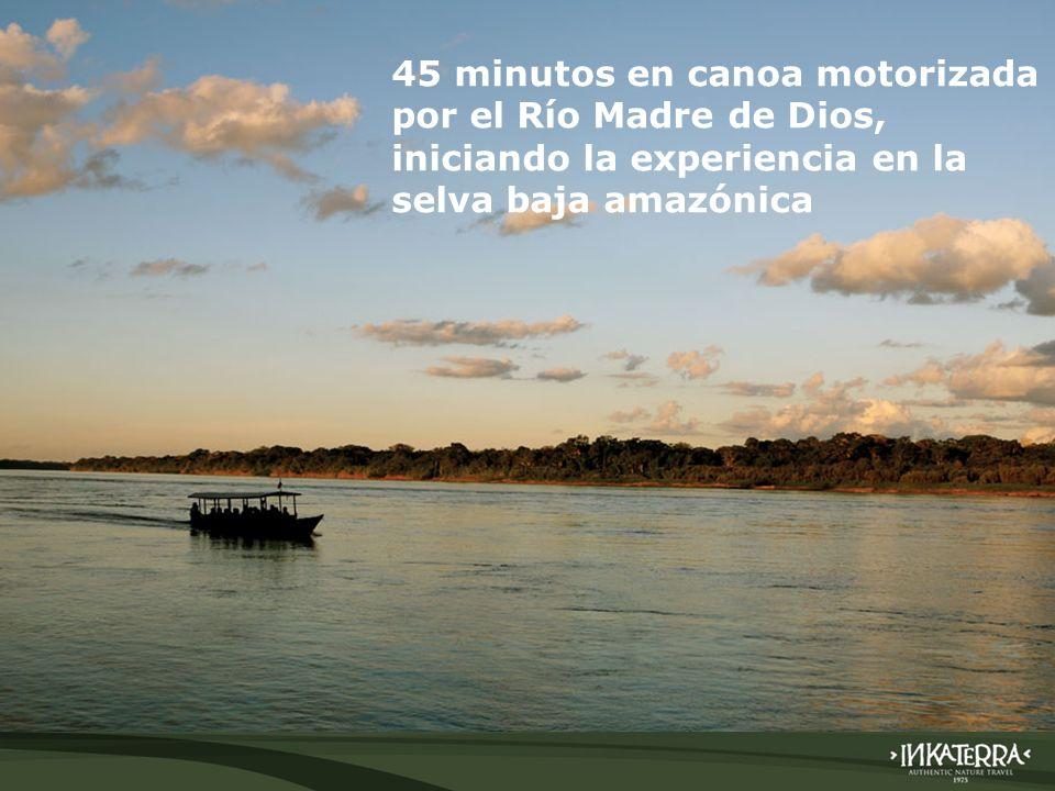 45 minutos en canoa motorizada por el Río Madre de Dios, iniciando la experiencia en la selva baja amazónica