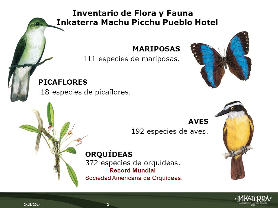 2/15/20142 MARIPOSAS 111 especies de mariposas. ORQUÍDEAS 372 especies de orquídeas. Record Mundial Sociedad Americana de Orquídeas. AVES 192 especies