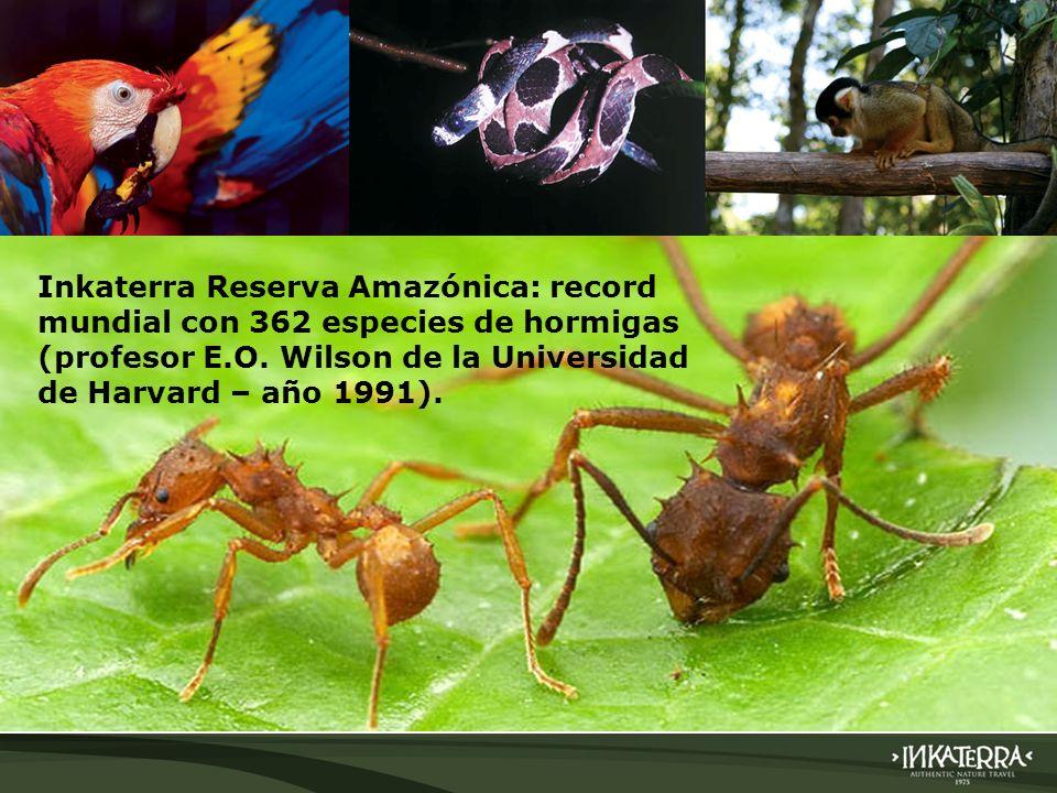 AMAZONICA SUITE BIODIVERSIDAD Inkaterra Reserva Amazónica: record mundial con 362 especies de hormigas (profesor E.O. Wilson de la Universidad de Harv