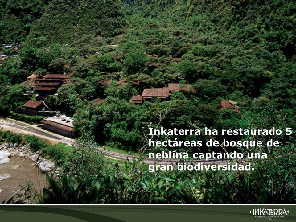 AMAZONICA SUITE Inkaterra ha restaurado 5 hectáreas de bosque de neblina captando una gran biodiversidad.