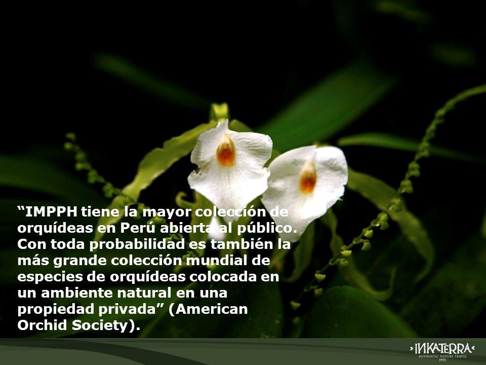 IMPPH tiene la mayor colección de orquídeas en Perú abierta al público. Con toda probabilidad es también la más grande colección mundial de especies d