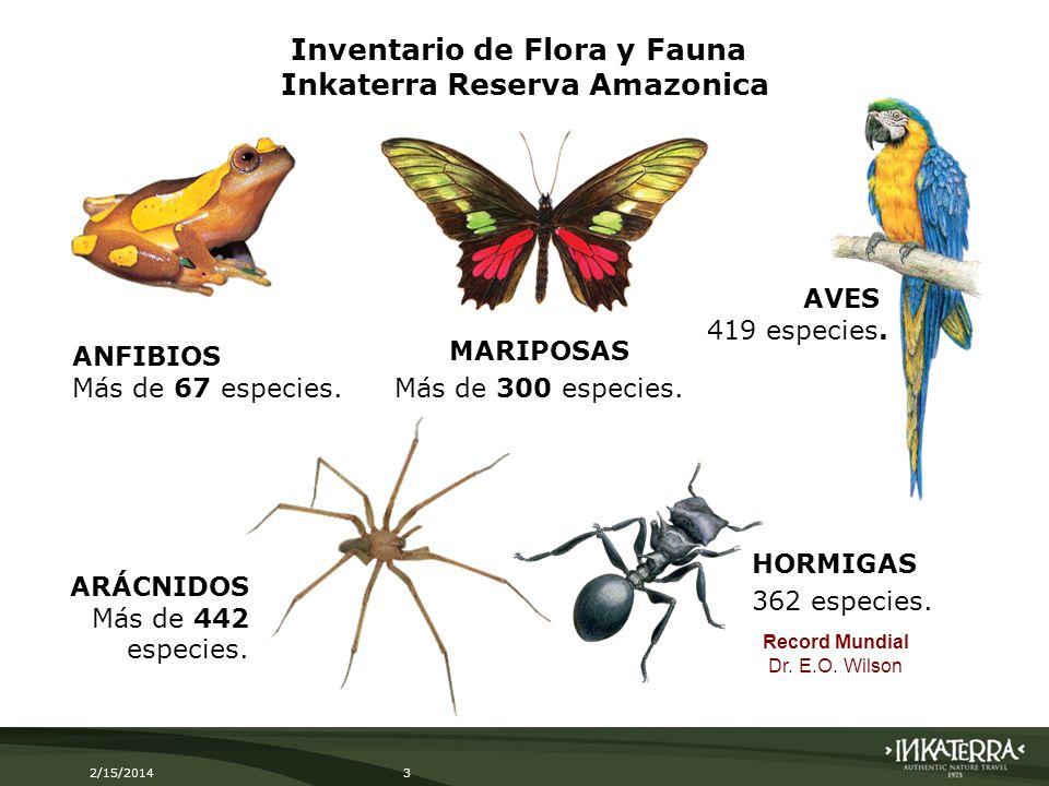 2/15/20143 MARIPOSAS Más de 300 especies. HORMIGAS 362 especies. ANFIBIOS Más de 67 especies. ARÁCNIDOS Más de 442 especies. AVES 419 especies. Record