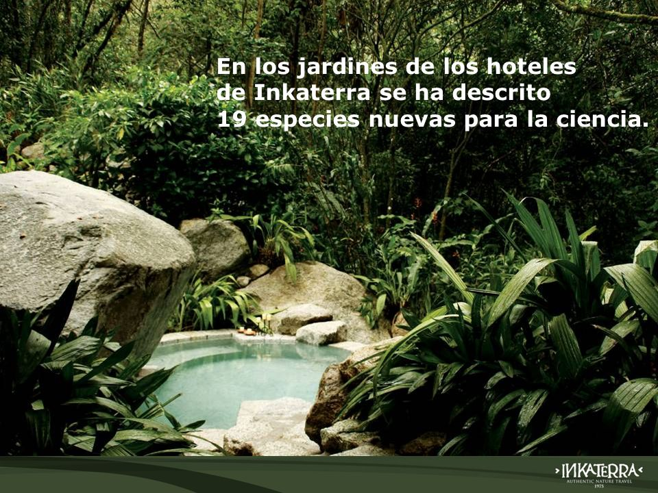 En los jardines de los hoteles de Inkaterra se ha descrito 19 especies nuevas para la ciencia.