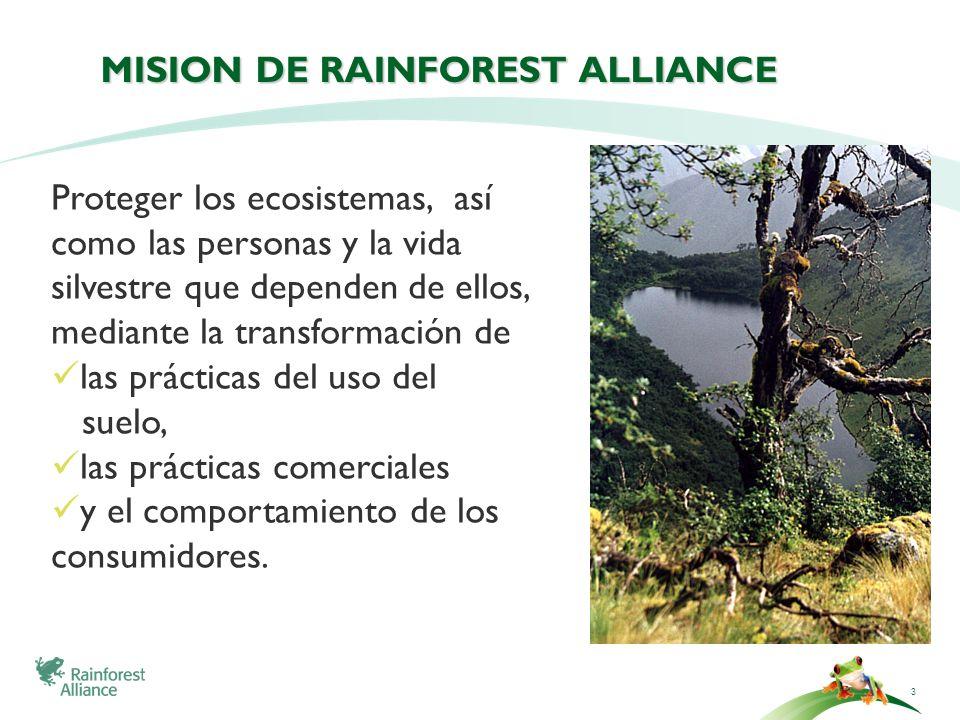 3 MISION DE RAINFOREST ALLIANCE Proteger los ecosistemas, así como las personas y la vida silvestre que dependen de ellos, mediante la transformación
