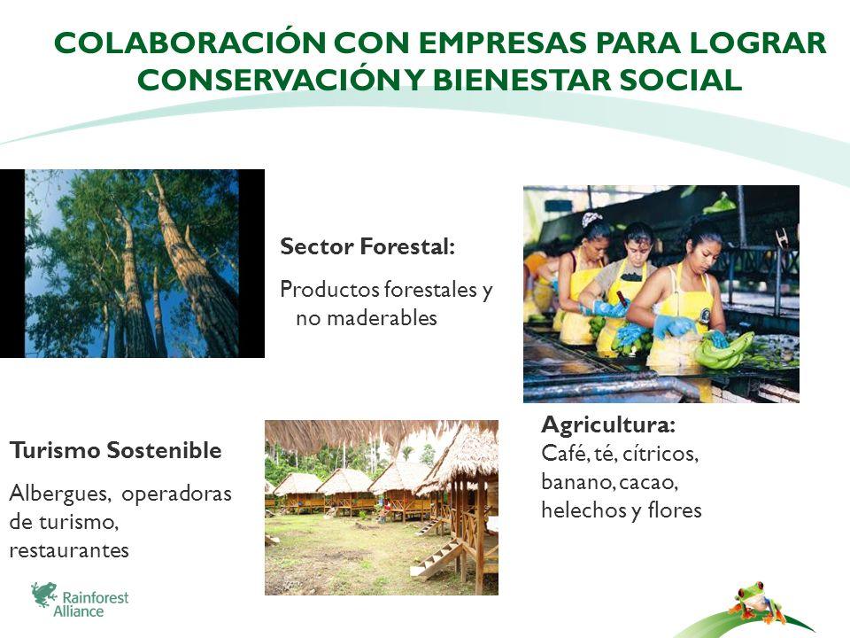 COLABORACIÓN CON EMPRESAS PARA LOGRAR CONSERVACIÓN Y BIENESTAR SOCIAL Sector Forestal: Productos forestales y no maderables Agricultura: Café, té, cít