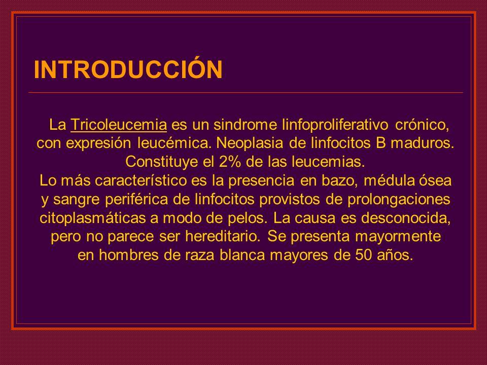 INTRODUCCIÓN La Tricoleucemia es un sindrome linfoproliferativo crónico, con expresión leucémica. Neoplasia de linfocitos B maduros. Constituye el 2%