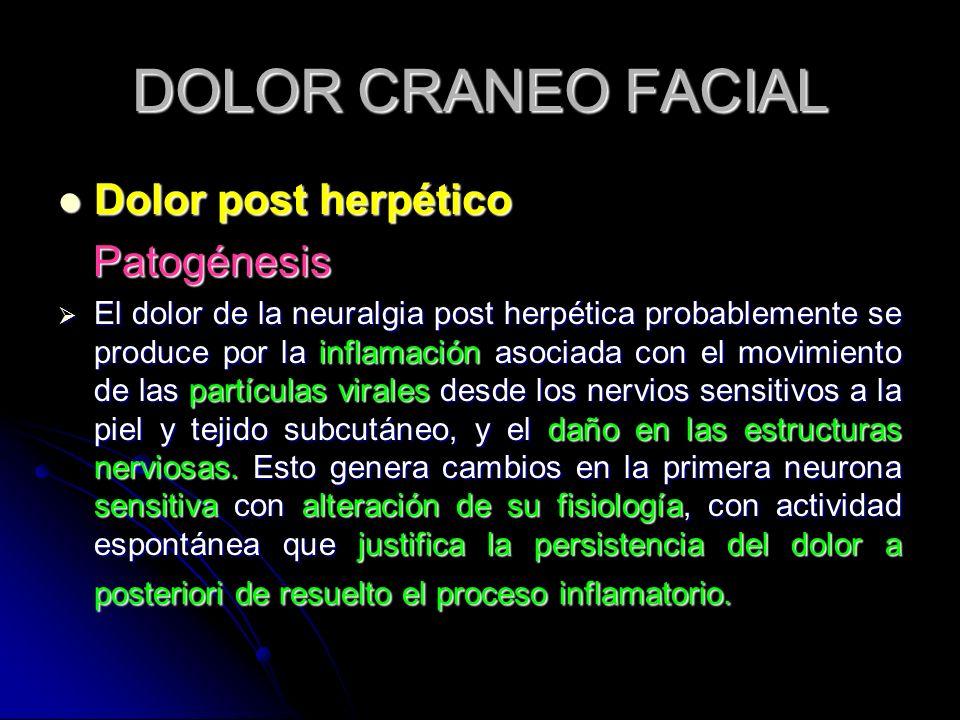 DOLOR CRANEO FACIAL Dolor post herpético Dolor post herpético Patogénesis Patogénesis El dolor de la neuralgia post herpética probablemente se produce