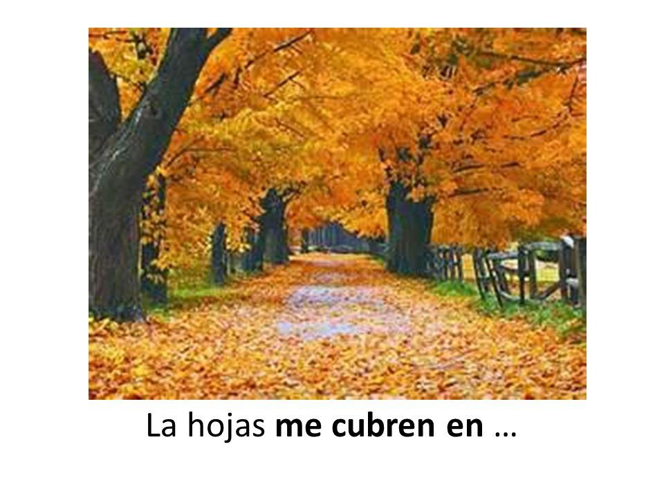 La hojas me cubren en …