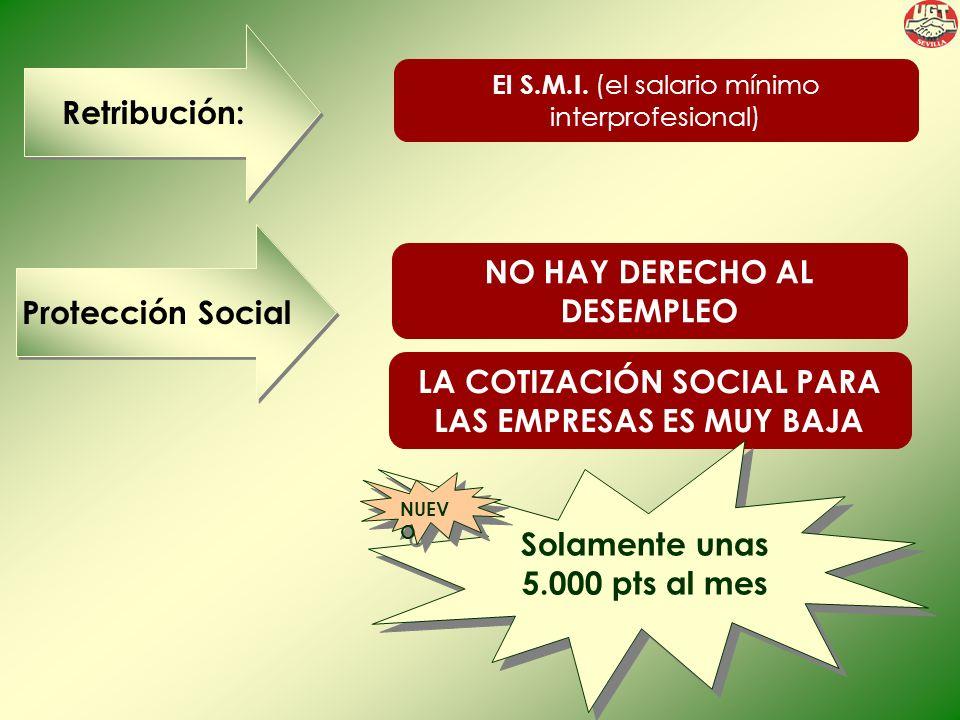 Retribución: Protección Social El S.M.I.