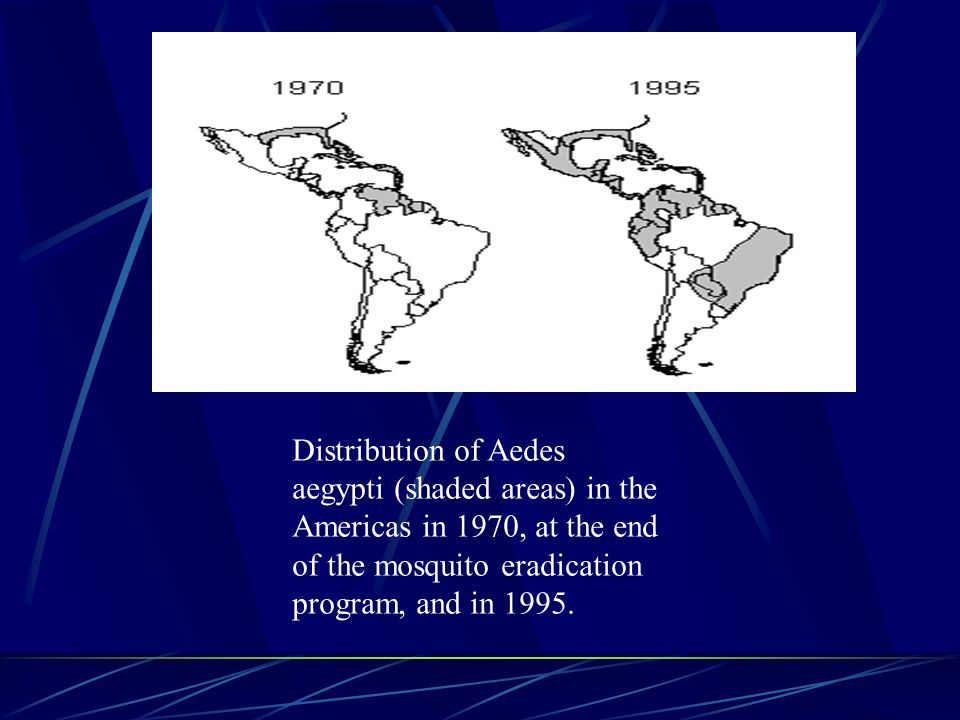 Distribution of Aedes aegypti (shaded areas) in the Americas in 1970, at the end of the mosquito eradication program, and in 1995.