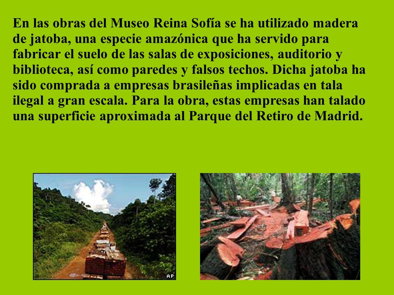 En las obras del Museo Reina Sofía se ha utilizado madera de jatoba, una especie amazónica que ha servido para fabricar el suelo de las salas de expos