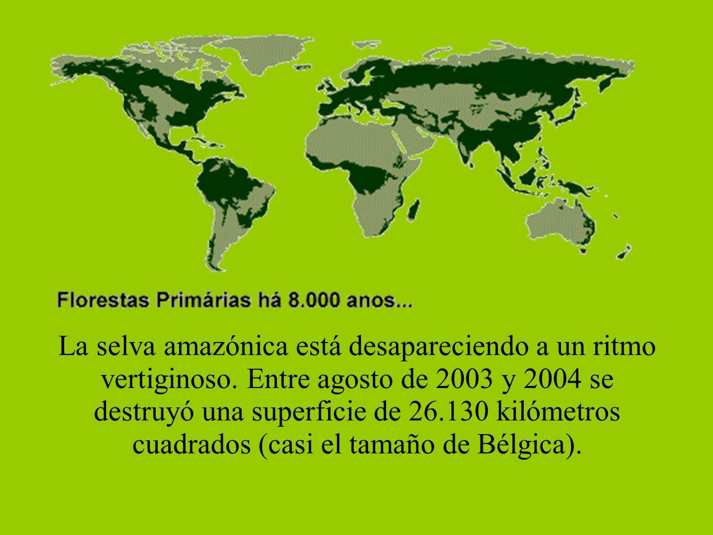 La selva amazónica está desapareciendo a un ritmo vertiginoso. Entre agosto de 2003 y 2004 se destruyó una superficie de 26.130 kilómetros cuadrados (
