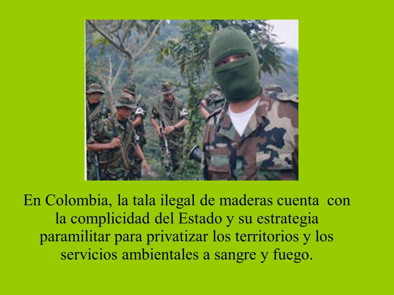 En Colombia, la tala ilegal de maderas cuenta con la complicidad del Estado y su estrategia paramilitar para privatizar los territorios y los servicio