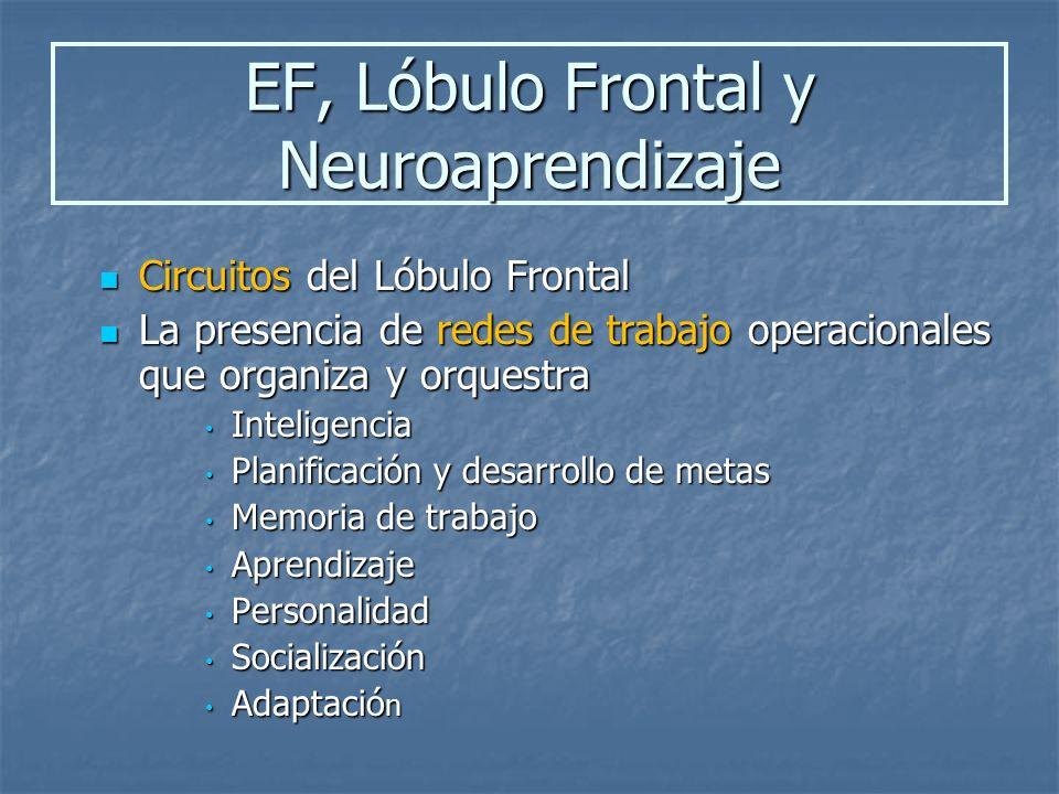 El lóbulo frontal se compone de tres regiones o estructuras principales: Motor Motor Premotor Premotor Prefrontal Prefrontal En niños como en adultos, el lóbulo frontal, especialmente la región prefrontal, asume un rol importante en funciones ejecutivas.