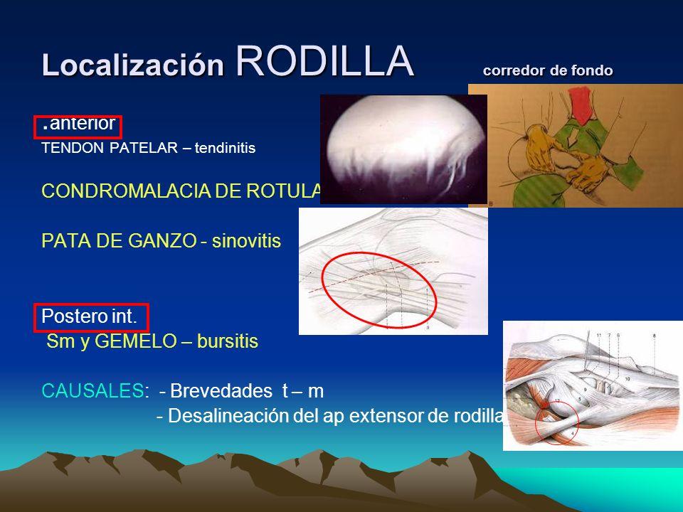Localización RODILLA corredor de fondo. anterior TENDON PATELAR – tendinitis CONDROMALACIA DE ROTULA PATA DE GANZO - sinovitis Postero int. Sm y GEMEL