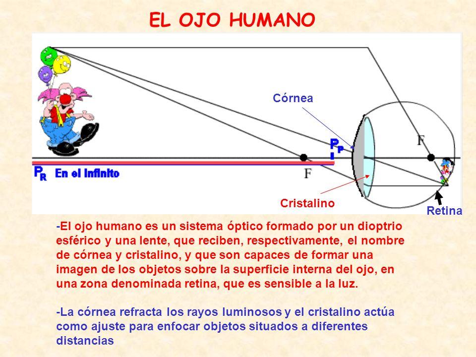 EL OJO HUMANO -El ojo humano es un sistema óptico formado por un dioptrio esférico y una lente, que reciben, respectivamente, el nombre de córnea y cristalino, y que son capaces de formar una imagen de los objetos sobre la superficie interna del ojo, en una zona denominada retina, que es sensible a la luz.